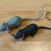 Set plastových myší, 2 ks